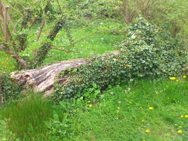 Biodiversité roseraie