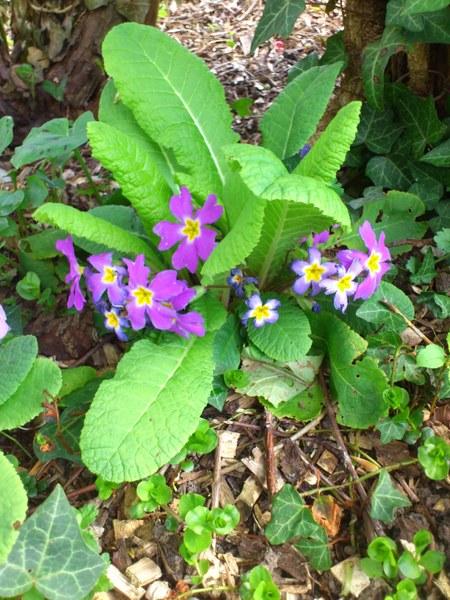 Biodiversité roseraie1
